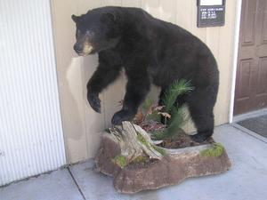 2-bear_taken_by_mary_lou_dixon