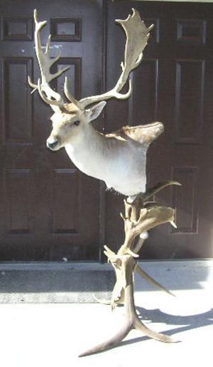 fallow_deer_pedestal_replace