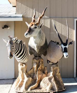 zebra__eland__gemsbok_taken_by_clay_sugg